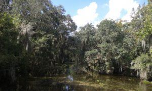 2016-09-21-swamp-tour